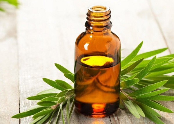 Tự chế kem dưỡng ẩm từ tinh dầu cây trà